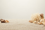 close up view of arranged coral and seashells on sand on grey backdrop - 201355950