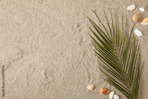 top view of green palm leaf and arranged seashells on sand