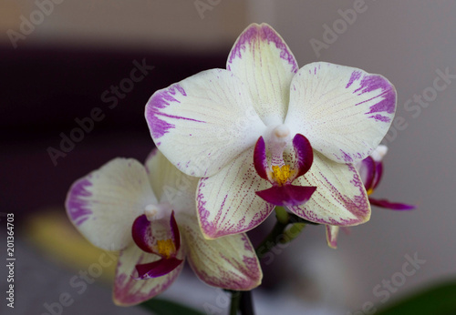 Beautiful room white with purple orchid - 201364703