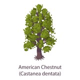 American chestnut icon. Flat illustration of american chestnut vector icon for web - 201377352