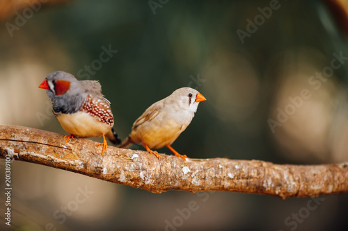 two canary birds on a branch