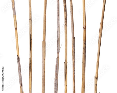 Foto Murales dry reed sticks isolated on white, clipping path