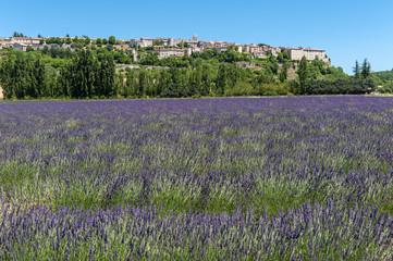 Lavendelfeld und Blick auf Sault