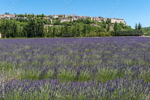 Lavendelfeld und Blick auf Sault - 201396718