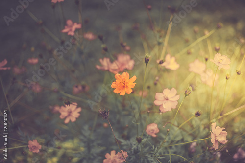 Wildflowers, sunny day, retro toning - 201401124