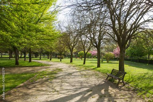 Foto Murales Parque público primaveral con caminos entre arboles de distintas especies