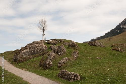 Aluminium Wit Young tree on mountain Rigi in Switzerland