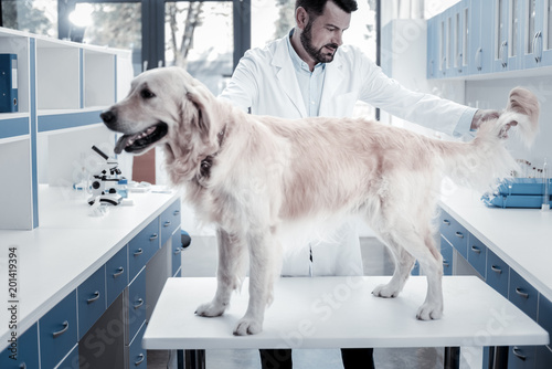 Foto Murales Professional checkup. Nice smart handsome doctor looking at the dog and holding its tail while doing professional medical checkup