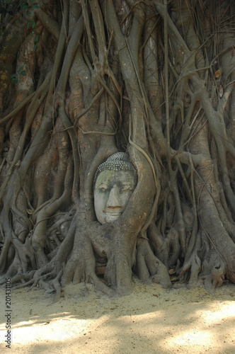 Aluminium Boeddha The face of a buddha stares out peacefully from a tree. The trunk and roots of the tree have grown around the statue.