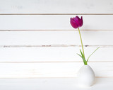 One Purple Spring Tulip in a Small Modern Light Gray Vase on a White Table and against distressed shiplap wood board background with extra room or space for copy, text or your design. - 201433500