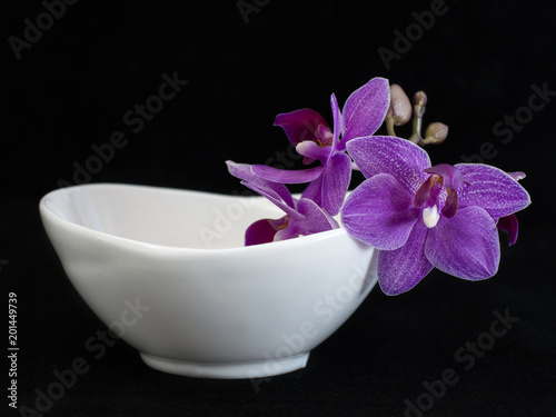orchid flowers on a black background.  - 201449739