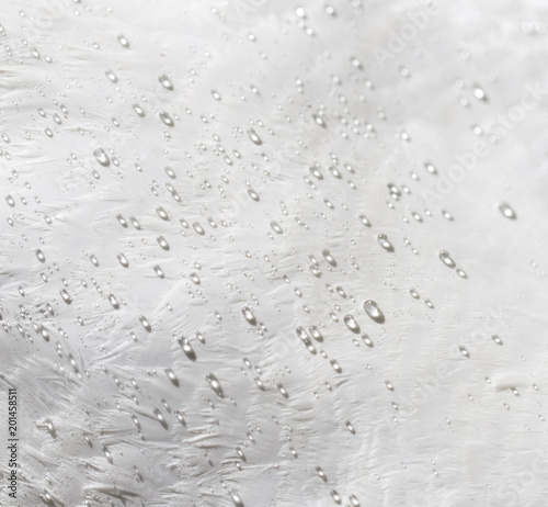 Water drops on white feathers of a bird as a background - 201458511