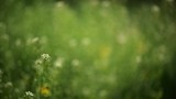 Abstract blur spring background, defocused grass and flowers on the wind in the meadow - 201469959