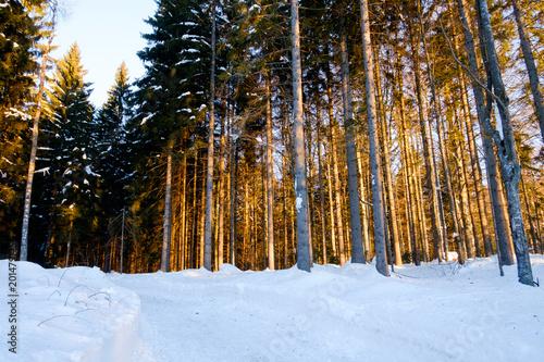 Foto Murales winter sunset sunrise