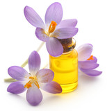 Saffron crocus flower with extract