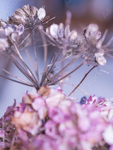 Foto Murales Purple Flowers2