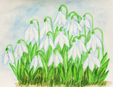 Snowdrops, watercolor painting