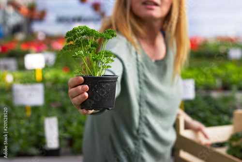 Woman holding a potted parsley plant in greenhouse