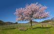 Leinwanddruck Bild - Frühling in der Südpfalz