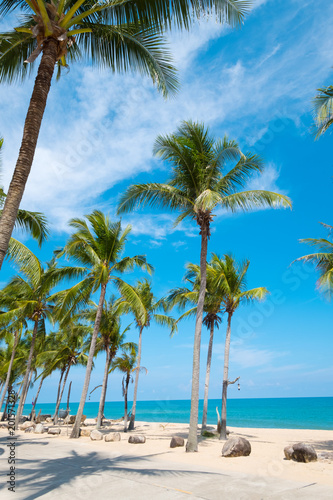 Fotobehang Caraïben Landscape of coconut palm tree on tropical beach in summer. Summer background concept.