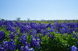Countryside view of Bluebonnet Trails in North Texas