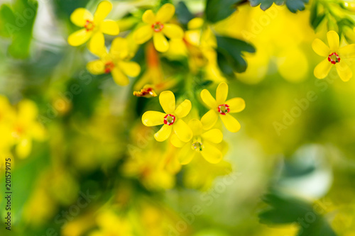 Foto Murales Little yellow flowers on the plant