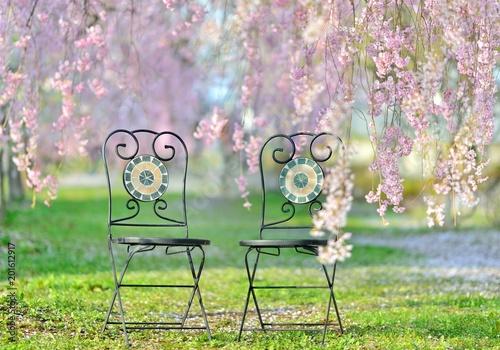 Fotobehang Lichtroze 桜の森・椅子のある風景