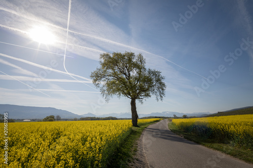 Foto Murales Isolated tree near a road