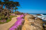 California purple - 201632753