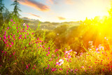 Spring nature background. Beautiful landscape park with green grass, blooming wild flowers and trees. Sunset scene
