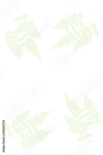 zielone liście na białym tle - 201664730