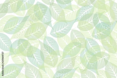 zielone liście na białym tle © elisabeth3