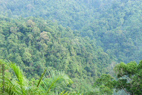 Foto Murales Beautiful scenery nature of tropical rainforest with mountain in thailand.