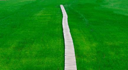 Rice farm green paddy and wooden bridge