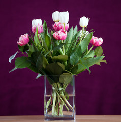 bouquet of white and pink tulips in front of wine-red  background