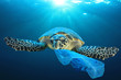 Quadro Plastic pollution in ocean environmental problem. Turtles can eat plastic bags mistaking them for jellyfish