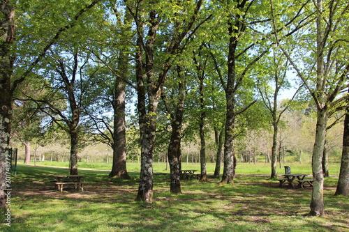 Foto Murales Tables et bancs de pique nique dans parc ombragé temps ensoleillé