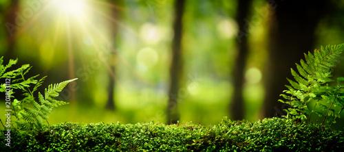 Leinwanddruck Bild Closeup on moss in forest