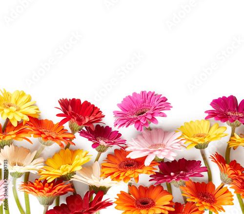 Fotobehang Gerbera Gerbera flowers isolated on white background