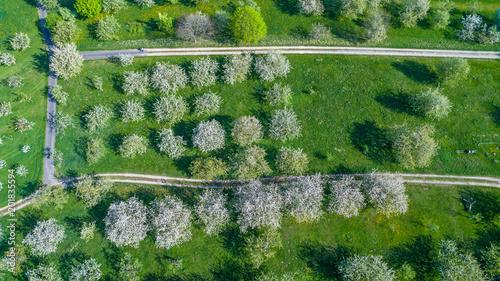 Foto Murales Blühende Kirschbäume aus der Vogelperspektive