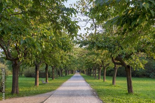 Foto Murales Parco Nord in Milan at fall
