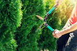 cutting thuja tree with garden hedge clippers - 201875780