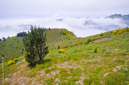 Foggy view in mountains, Madeira, Portugal - 201895197