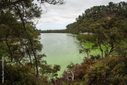 Plexiglas Olijf A green lake at the Waiotapu Geothermal Wonderland in New Zealand near Rotorua.