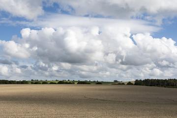 Campo agrícola sembrado de girasoles, las plantas están recién germinadas, cielo muy nublado
