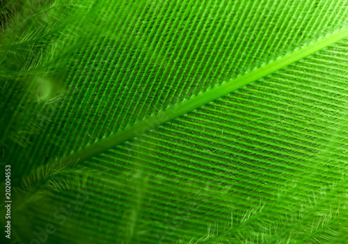 Green feather as an abstract background