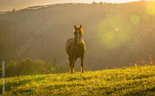 Plexiglas Paarden Horse in the mountains