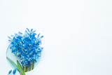 Blank greeting card. Fresh, beautiful blue snowdrops ( scilla ) on white background. First messengers of spring. Bouquet of flower. Empty place for inspirational, motivational text or quote.