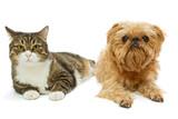 Grey cat and dog lie together - 202089551