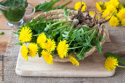 Fototapeta Whole dandelion plants with roots in a basket